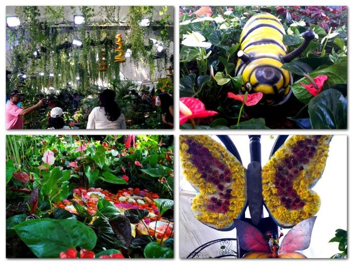butterflies natural environment